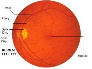 Image of eye interior